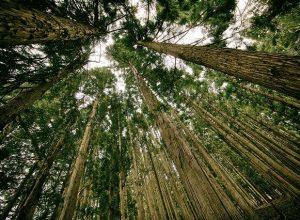 Ekolojik Köprünün Yaşam Üzerinde Etkisi